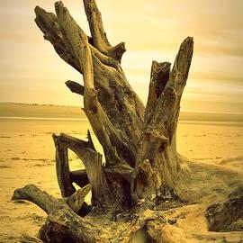 Linda Covino - Driftwood Beach