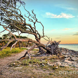 Kerri Farley - Driftwood Beach Morning 2
