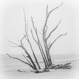 Driftwood In Black And White by Andrew Wilson