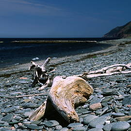 Sally Weigand - Driftwood on Rocky Beach