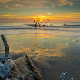 Driftwood by Ray Silva