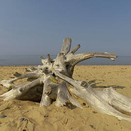 Driftwood by William Moore