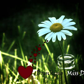 Drinking To Miss Daisy by Barbara St Jean