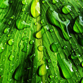 Droplets by Maggy Marsh