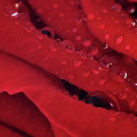 Garrick Girard - Droplets on Rose