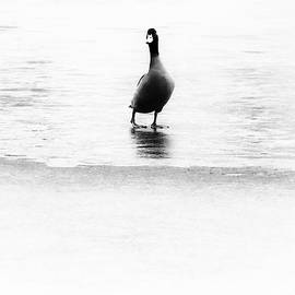 Jaroslav Buna - Duck And Ice