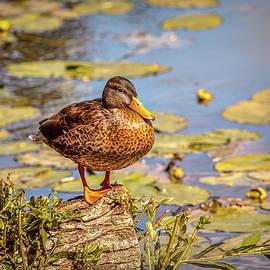 Leif Sohlman - Duck view #g6