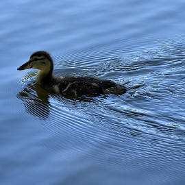 Maria Keady - Duckling with Wake