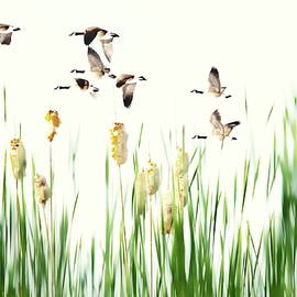 Ducks in Flight - Migration  by Andrea Kollo