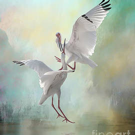Brian Tarr - Duelling White Ibises