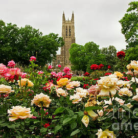 Jill Lang - Duke Chapel and Roses