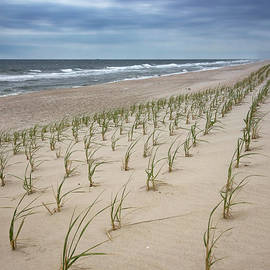 Anthony Tucci - Dune Grass