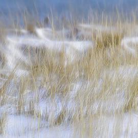 Marty Saccone - Dune Grasses Snowscape