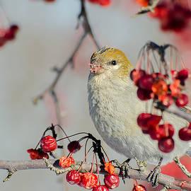 Hard Beak Pine by Gina Levesque