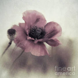 Priska Wettstein - Dusty pink poppy