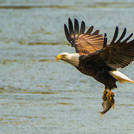 Jeff at JSJ Photography - Eagle Departing with Prize Close-Up