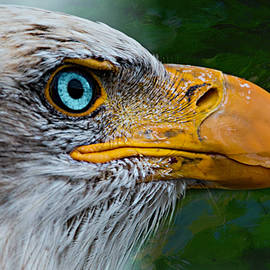 Ally White - Eagle Eye