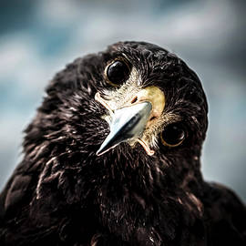 Michael Mogensen - Eagle look
