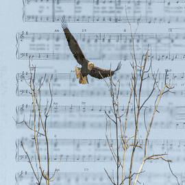 Eagle On Sheet Of Music by Randy J Heath