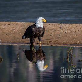 Mitch Shindelbower - Eagle Reflection