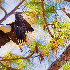 Deborah Benoit - Eagle Series Nesting 2018