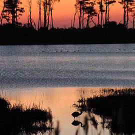Early Bird in a Chincoteague Dawn by Maili Page