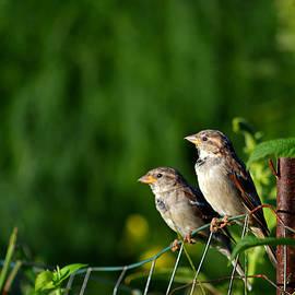 Dianne Cowen - Early Birds in The Garden