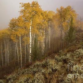 Lynn Sprowl - Early Morning Fog