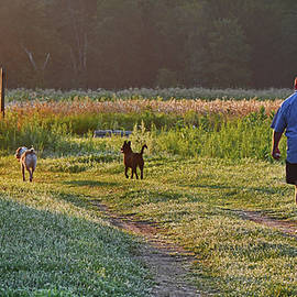 Early Morning Walk With Friends by Ken Stampfer