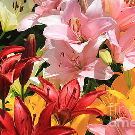 Early Summer Beauties - Daylilies by Dora Sofia Caputo Photographic Design and Fine Art