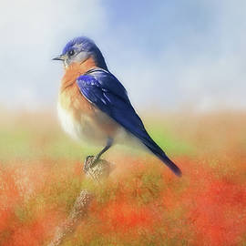 Donna Kennedy - Eastern Bluebird