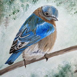 Angeles M Pomata - Eastern Bluebird