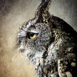 Melissa Bittinger - Eastern Gray Morph Screech Owl Profile