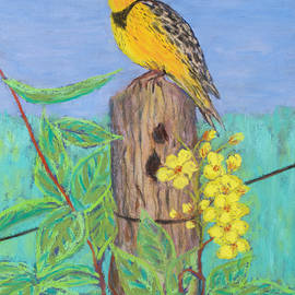 Patricia Beebe - Eastern Meadowlark