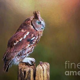 Eastern Screech Owl Red Morph Profile by Sharon McConnell