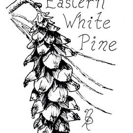 Eastern White Pine Cone On A Branch by Nicole Angell