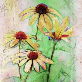 Variance Collections - Echinacea - a56