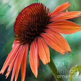Echinacea  by Beverly Guilliams