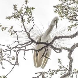 Janal Koenig - Egret Above