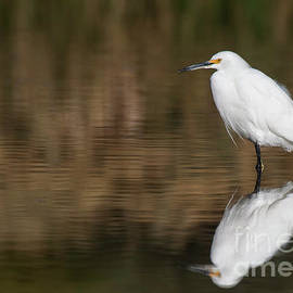 Egret after all this time  by Ruth Jolly