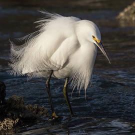 Egret Fishing by Bruce Frye