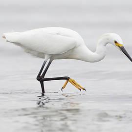Ruth Jolly - Egret in the Ocean