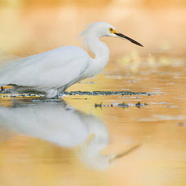 Egret when the sun is setting  by Ruth Jolly