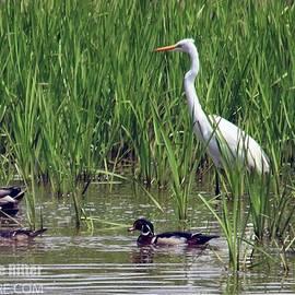 Egret Wood Duck 6236 by Captain Debbie Ritter