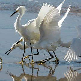 Bruce Frye - Egrets on the Shore