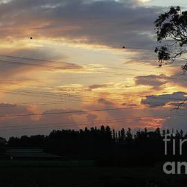 Arik Baltinester - Electrified sunset