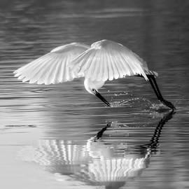 Elegant Egret by Ruth Jolly
