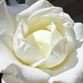 Cindy Treger - Elegant In White - Rose