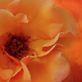 Terry Davis - Elegant Peach Rose Textured