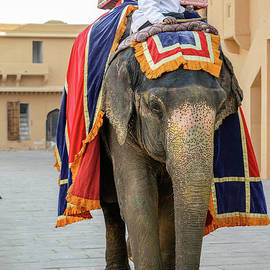 Elephant At Amber Fort 01 by Werner Padarin